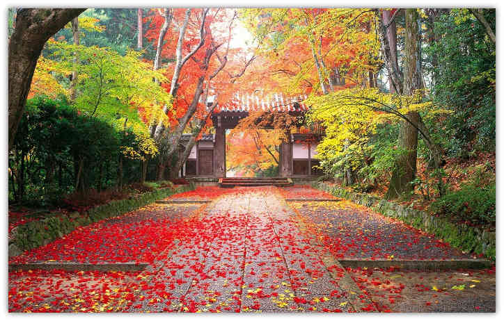 AutumnLeaves_1A