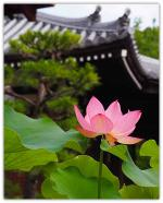 lotushokongo-intemple-b