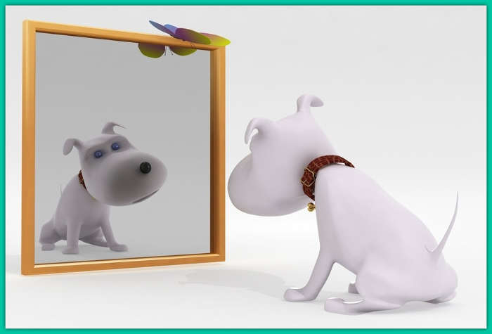DogInTheMirror_A