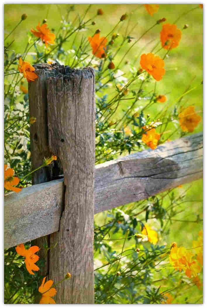 FenceFlowers1_B